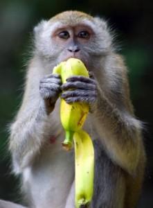 hva spiser aper