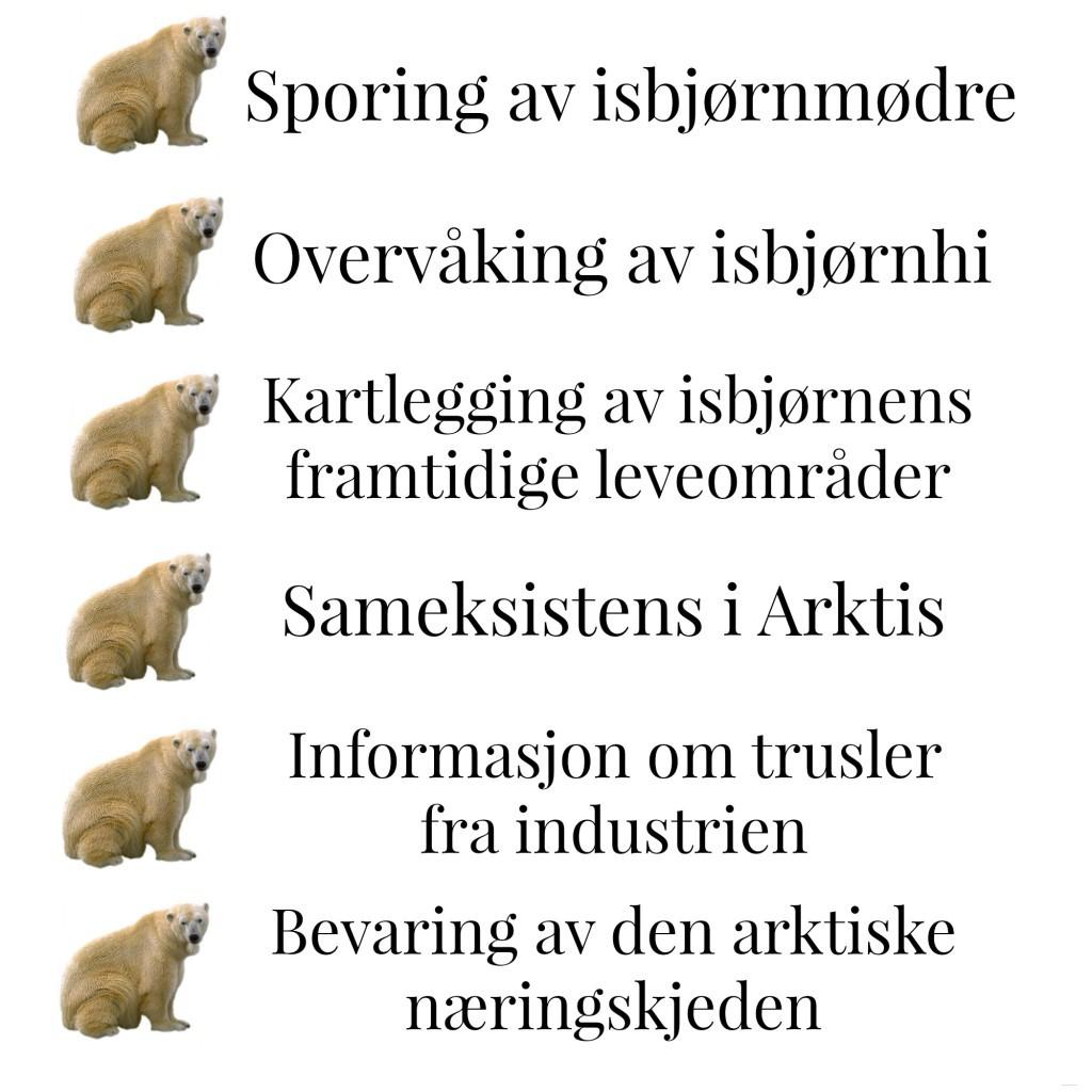 isbjørn1